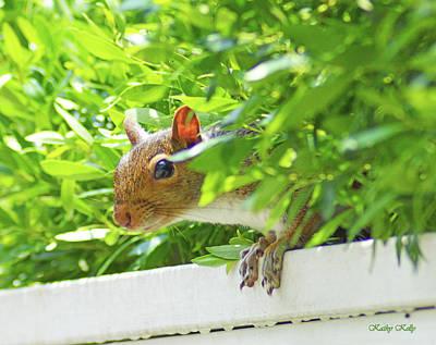 Peek-a-boo Gray Squirrel Art Print