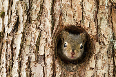 Photograph - Peek A Boo 2 by Karin Pinkham