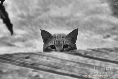 Photograph - Peek A Boo by Carole Martinez