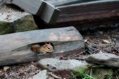 Photograph - Peek A Boo by Dan Friend