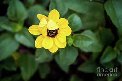 Photograph - Peek A Boo Flower by Liesl Marelli