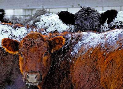 Photograph - Peek A Boo Heifers by Amanda Smith