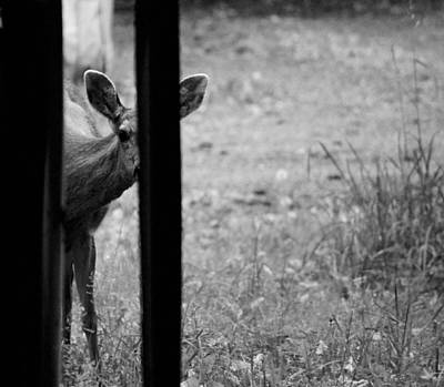 Photograph - Peek A Boo I Can See You by Kym Backland
