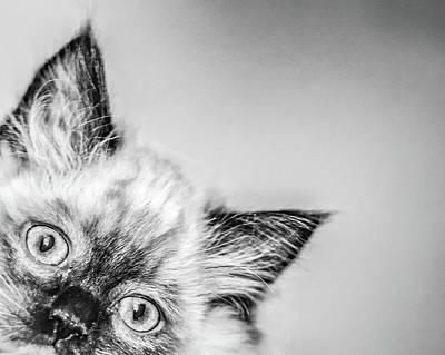 Photograph - Peek A Boo by Jennifer Grossnickle