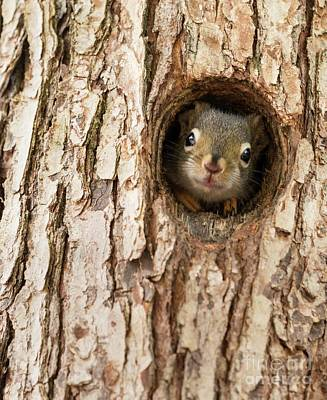 Photograph - Peek A Boo by Karin Pinkham
