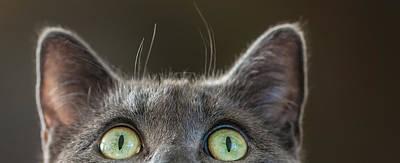 Pussycat Photograph - Peek-a-boo by Maggie Terlecki