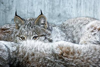 Photograph - Peek-a-boo by Michael Hubley
