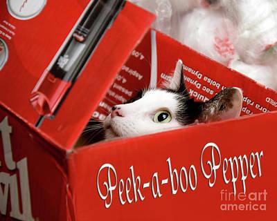 Cardboard Box Photograph - Peek-a-boo Pepper by Andee Design