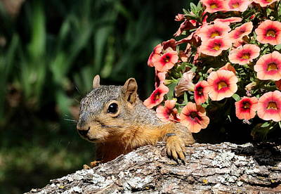 Photograph - Peek-a-boo Squirrel by Sheila Brown