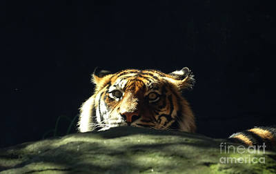 Art Print featuring the photograph Peek-a-boo Tiger by Angela DeFrias