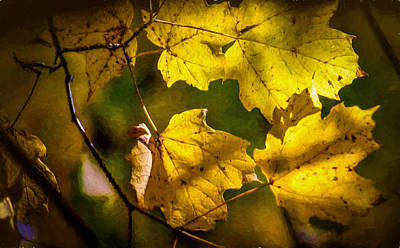 Shed Digital Art - Peek Of Autumn Gold by Black Brook Photography