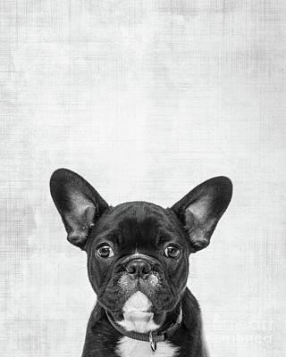 Boston Terrier Wall Art - Photograph - Peekaboo Boston Terrier by Delphimages Photo Creations