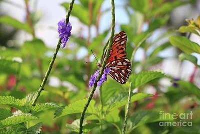 Flowers On Line Photograph - Peekaboo Butterfly by Carol Groenen