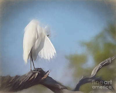 Painting - Peekaboo Egret by Kerri Farley
