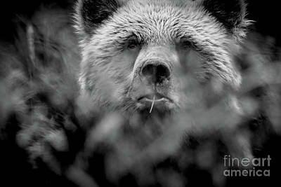 Photograph - Peekaboo Grizzly by Kim Clune
