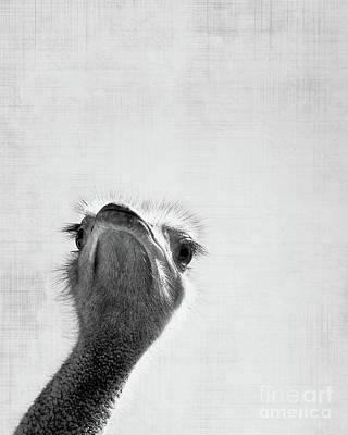 Ostrich Photograph - Peekaboo Ostrich by Delphimages Photo Creations