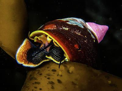 Peekaboo Snail Art Print