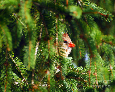 Photograph - Peeking From The Pines by Kerri Farley