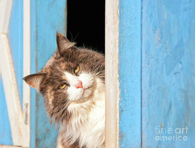 Photograph - Peeking Out At You by Sari ONeal