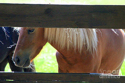 Photograph - Peeking Pony by Kathy White