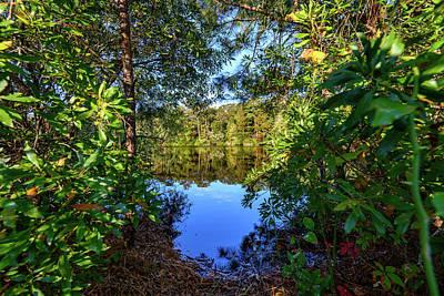 Photograph - Peeking Through The Forest by Michael Scott