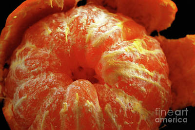 Peeled Mandarin Orange Original by Nancy Mueller