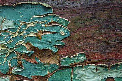 Photograph - Peeling by Mike Eingle