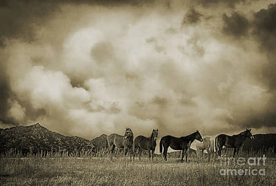 Peeples Valley Horses In Sepia Art Print by Priscilla Burgers