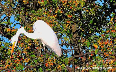 Photograph - Peering Atop The Apple Tree by Tami Quigley