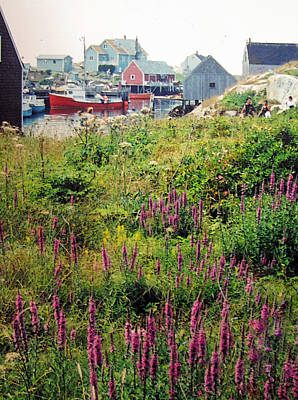 Photograph - Peggys Cove Wild Flowers by Ian  MacDonald