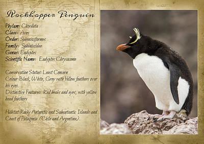 Yellow Beak Mixed Media - Peguin Taxonomic Card II by Hernan Caputo