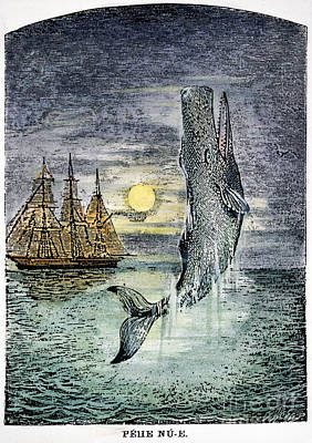 Pehe Nu-e: Moby Dick Print by Granger