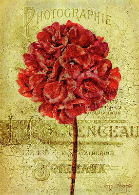 Photograph - Pelargonium Photographie by Nancy Morgantini