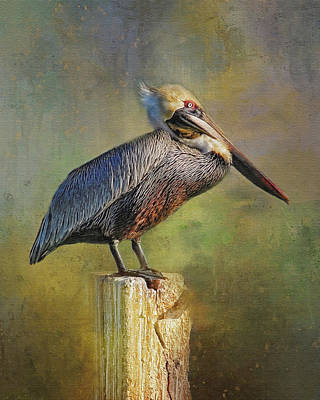 Photograph - Pelecanus Occidentalis - Brown Pelican by HH Photography of Florida