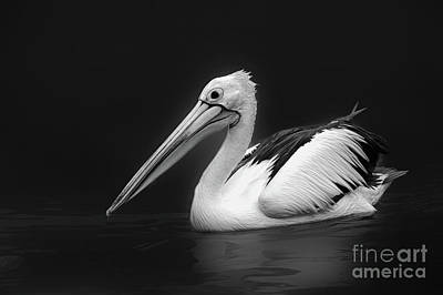 Photograph - Pelican 2 by Charuhas Images