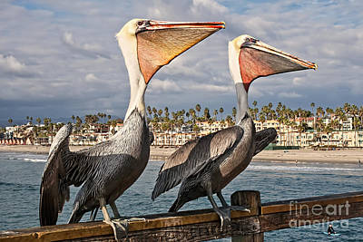 Photograph - Pelican - A Happy Landing by Gabriele Pomykaj