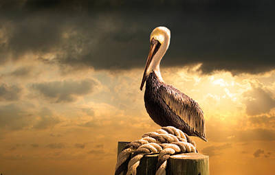 Animals Photos - Pelican after a storm by Mal Bray