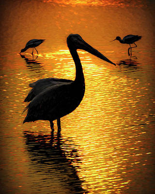 Photograph - Pelican And Avocets by Rob Graham