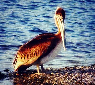 Photograph - Pelican At Huntington Beach State Park by Jean Fry