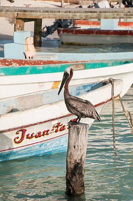 Digital Art - Pelican At Isla Mujeres by Carol Ailles
