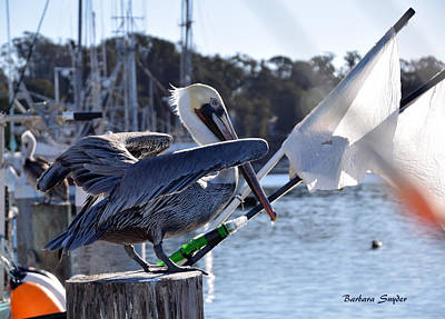 Painting - Pelican At Morro Bay California Ready For Take Off by Barbara Snyder