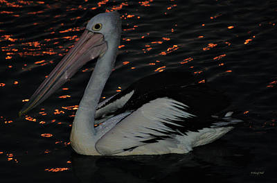 Photograph - Pelican At Night by Cheryl Hall