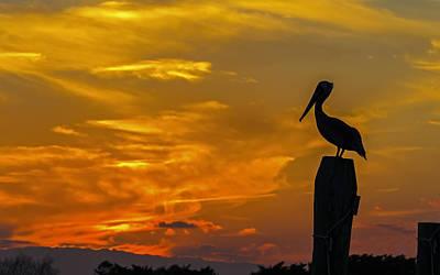 Pelican At Silver Lake Sunset Ocracoke Island Art Print