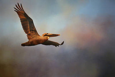 Photograph - Pelican At Sunrise 2 by Jai Johnson