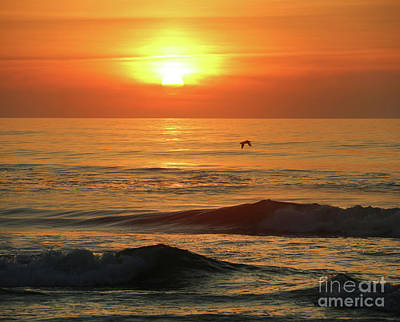 Photograph - Pelican At Sunrise 3328 by Jack Schultz