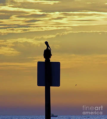 Photograph - Pelican At Sunset by D Hackett