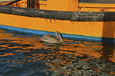 Photograph - Pelican At The Fishing Boat by Denise Mazzocco