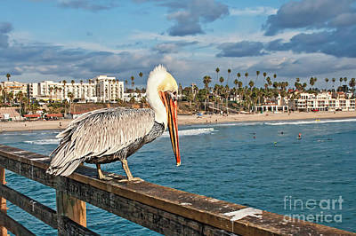 Photograph - Pelican At The Fishing Point by Gabriele Pomykaj