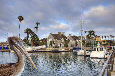 Photograph - Pelican Bay by David Zanzinger
