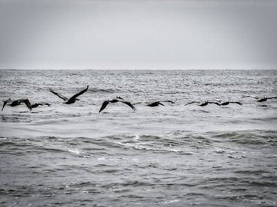 Photograph - Pelican Black And White by Michael Colgate